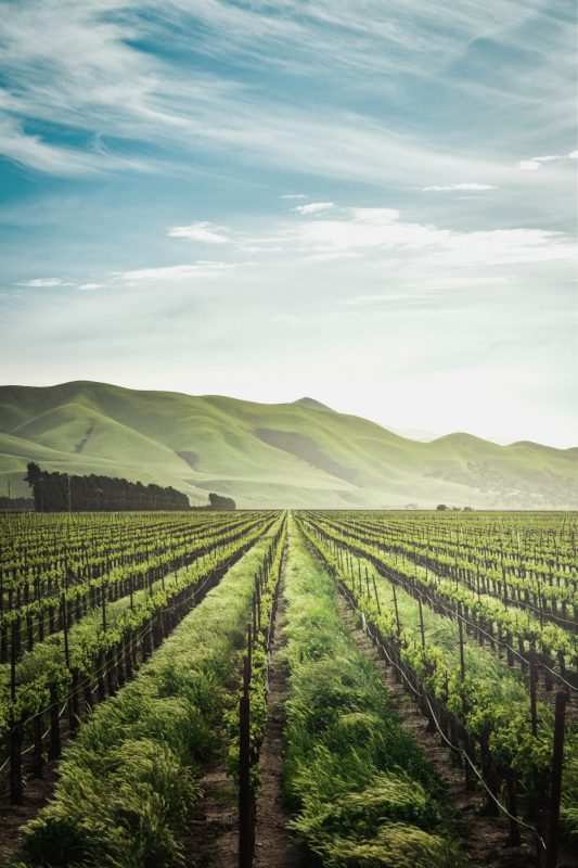Wondering about US Vineyards to Visit that aren't in Napa? We've got you covered.